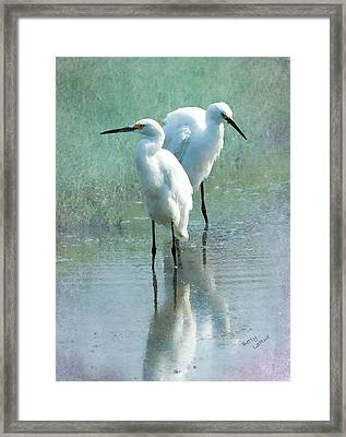 Great Egrets Framed Print by Betty LaRue