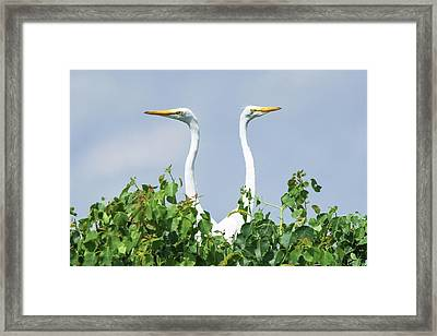 Great Egrets On The Lookout Framed Print by Ellie Teramoto