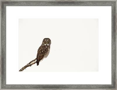 Great Gray On White Framed Print by Tim Grams