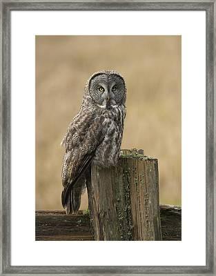 Great Gray Owl Framed Print by Doug Herr