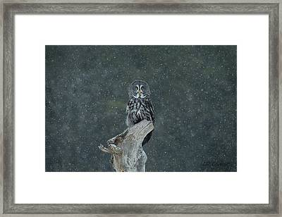 Great Gray Owl In Snowstorm Framed Print
