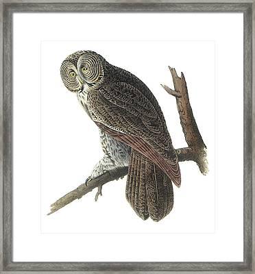 Great Gray Owl Framed Print by John James Audubon