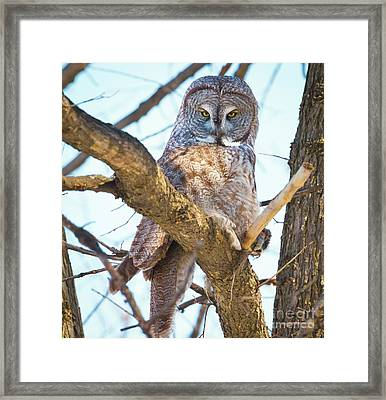 Great Gray Owl Framed Print by Ricky L Jones