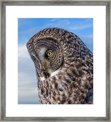 Great Gray Owl Framed Print by TL Mair