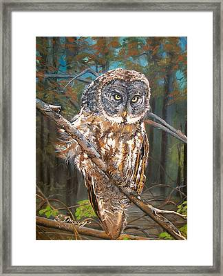 Great Grey Owl 2 Framed Print