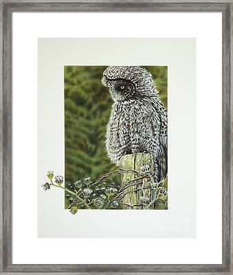 Great Grey Owl Framed Print by Greg and Linda Halom