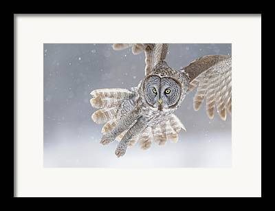 Great Birds Photographs Framed Prints