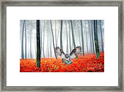 Great Grey Owl Framed Print by Laura D Young