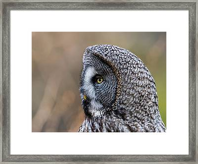 Great Grey's Profile A Closeup Framed Print by Torbjorn Swenelius