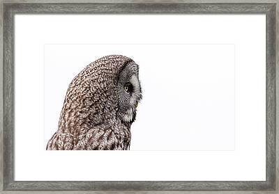 Great Grey's Profile On White Framed Print