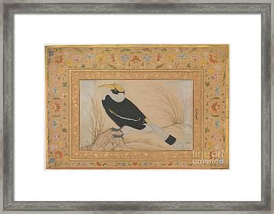 Great Hornbill Framed Print by Celestial Images