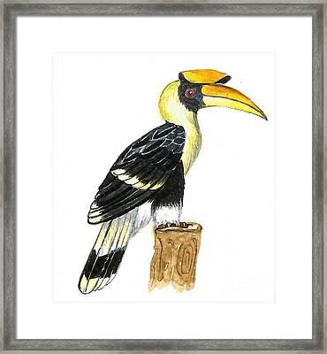Great Hornbill Framed Print by Ketki Fadnis