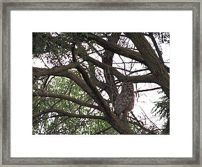 Great Horned  Framed Print by Athena Ellis