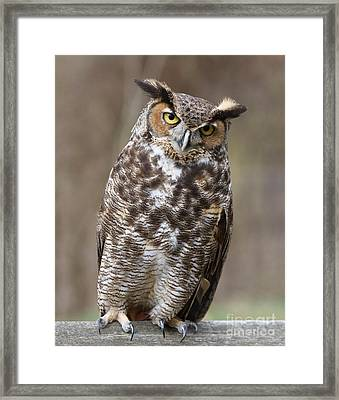 Framed Print featuring the photograph Great Horned Owl 3 by Chris Scroggins