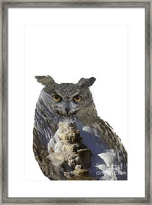 Great Horned Owl And Mammoth Hot Springs Framed Print
