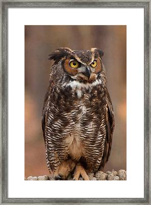 Framed Print featuring the digital art Great Horned Owl Digital Oil by Chris Flees