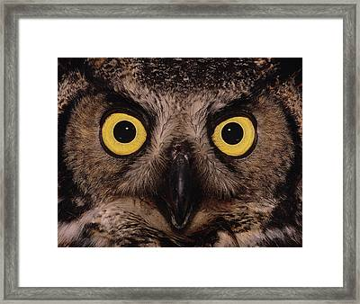 Great Horned Owl Face Framed Print by Tony Beck
