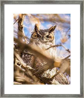 Great Horned Owl - Fielding Garr Ranch Framed Print by Gary Whitton