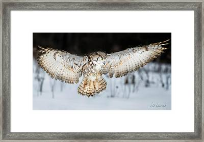 Great Horned Owl Flight Framed Print by CR  Courson