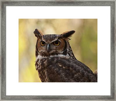 Framed Print featuring the photograph Great Horned Owl In A Tree 1 by Chris Flees