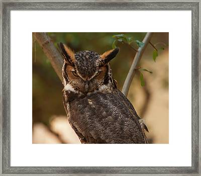 Framed Print featuring the photograph Great Horned Owl In A Tree 2 by Chris Flees