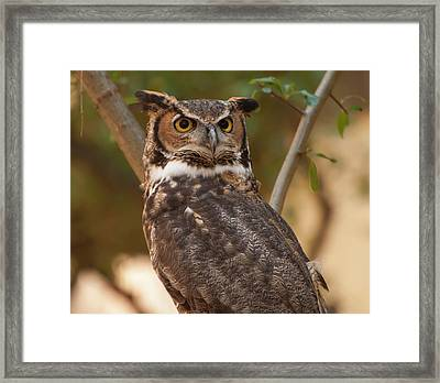 Framed Print featuring the photograph Great Horned Owl In A Tree 3 by Chris Flees
