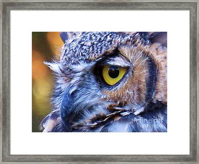 Feather Eyelashes Framed Print by Michele Penner
