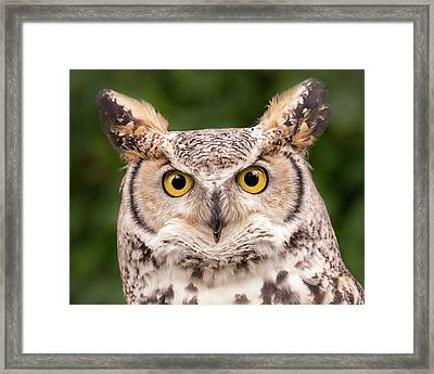 Great Horned Owl, Northern Color Variant Framed Print by Jim Hughes