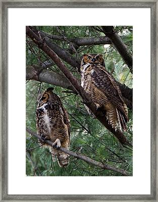 Mirror Image? Framed Print