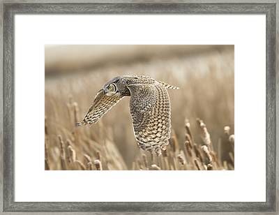 Great Horned Owl Framed Print by Peter Stahl