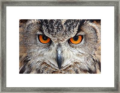 Great Horned Owl Framed Print by Pierre Leclerc Photography