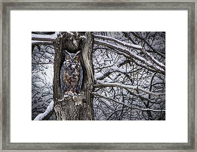 Great Horned Owl Sitting In A Tree During A Snowstorm Framed Print by Randall Nyhof