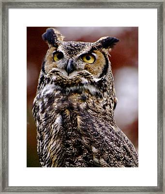 Great Horned Owl Framed Print by Sonja Anderson