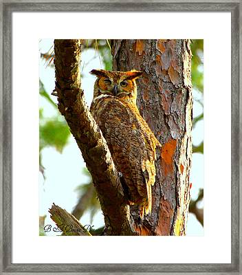Framed Print featuring the photograph Great Horned Owl Wink by Barbara Bowen