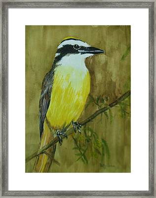 Framed Print featuring the painting Great Kiskadee by Betty-Anne McDonald