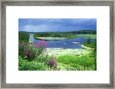 Great Meadows National Wildlife Refuge Framed Print by John Burk