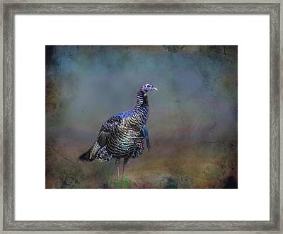 Great Smokey Turkey Framed Print