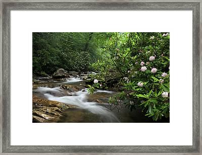 Great Smoky Mountains Rosebay Rhododendron Framed Print by Mark VanDyke