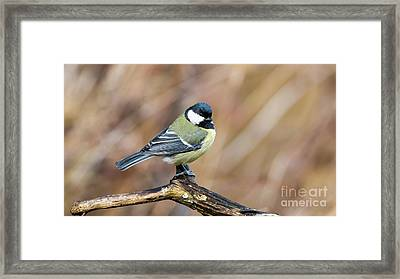 Great Tit In Fall Framed Print