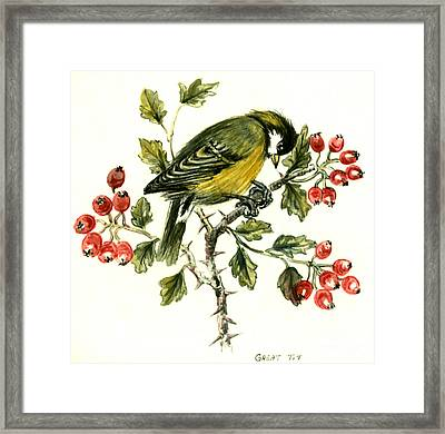 Great Tit On Hawthorn Framed Print by Nell Hill