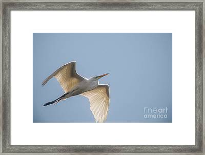Framed Print featuring the photograph Great White Egret - 2 by David Bearden