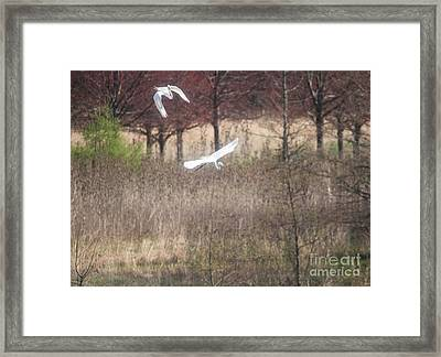 Framed Print featuring the photograph Great White Egret - 3 by David Bearden