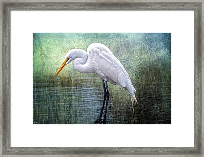 Great White Egret Framed Print by Bonnie Barry