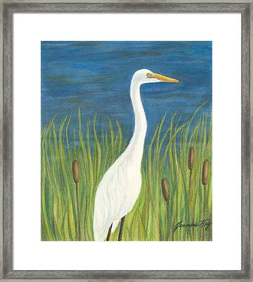 Great White Egret By Pond Framed Print