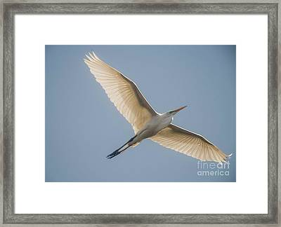 Framed Print featuring the photograph Great White Egret by David Bearden