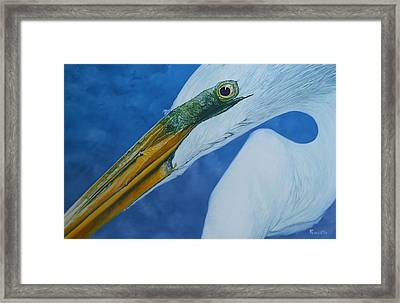 Great White Egret Framed Print by Jon Ferrentino