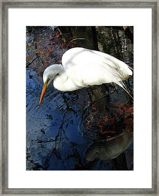 Great White Egret Framed Print by Juergen Roth