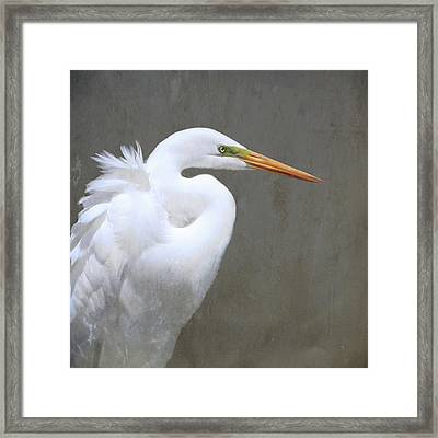 Great White Egret Framed Print