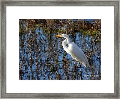 Great White Egret Framed Print by Wingsdomain Art and Photography