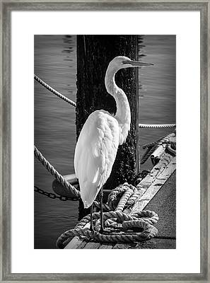 Great White Heron In Black And White Framed Print by Garry Gay
